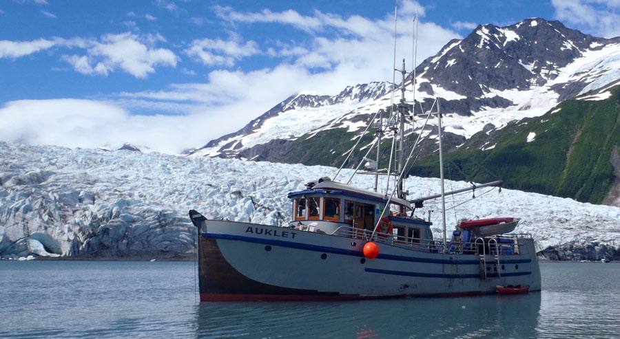 Auklet Charter Services